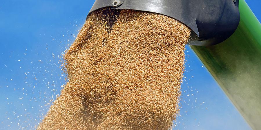 teff whole grain